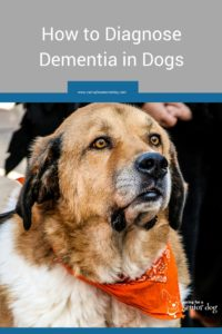 diagnosing dementia in dogs