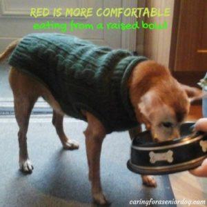 how to make your home senior dog friendly