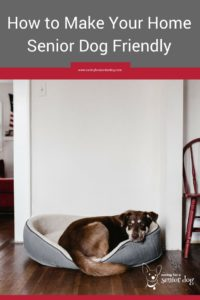 making-your-home-senior-dog-friendly