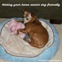 making your home senior dog friendly