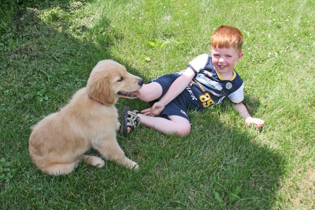puppy-2197326_1920