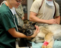 8 Things to Consider When Choosing a Vet