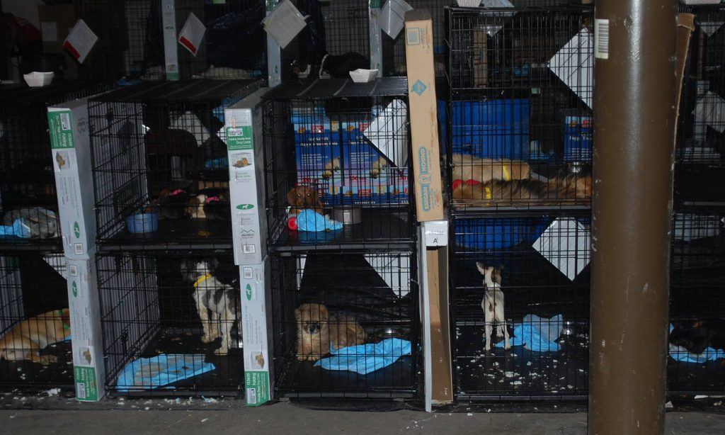 This is a Puppy Mill