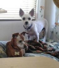 Saffy puppy mill rescue