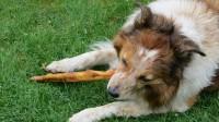 dog-184332_640