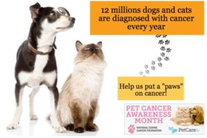 Dog and Cat Cancer Awareness