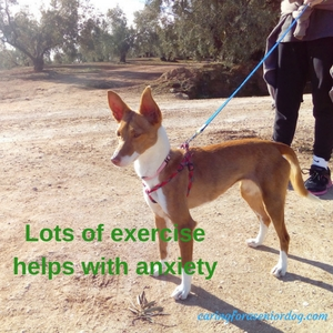 lots of exercise helps with separation anxiety in dogs