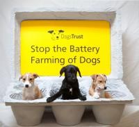 Close Down Puppy Farms