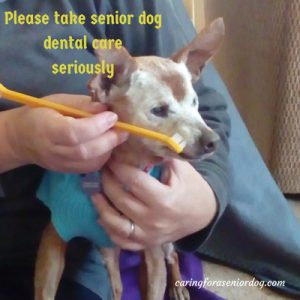 involve your vet in caring for your senior dog