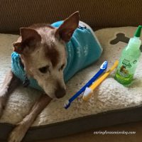 senior dog dental care