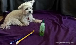 the best toothpaste for dogs