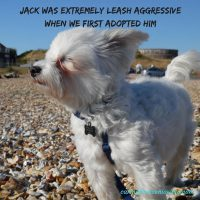 leash aggression training