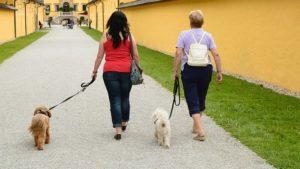 Women Walking Their Dogs