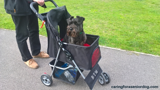 21 reasons to buy a pet stroller
