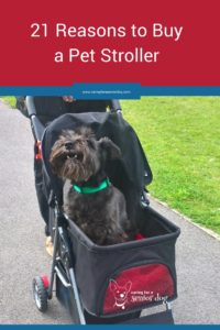 21 reasons why you need to buy a pet stroller