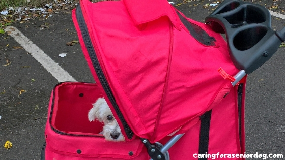 21 reasons to buy a stroller for dogs
