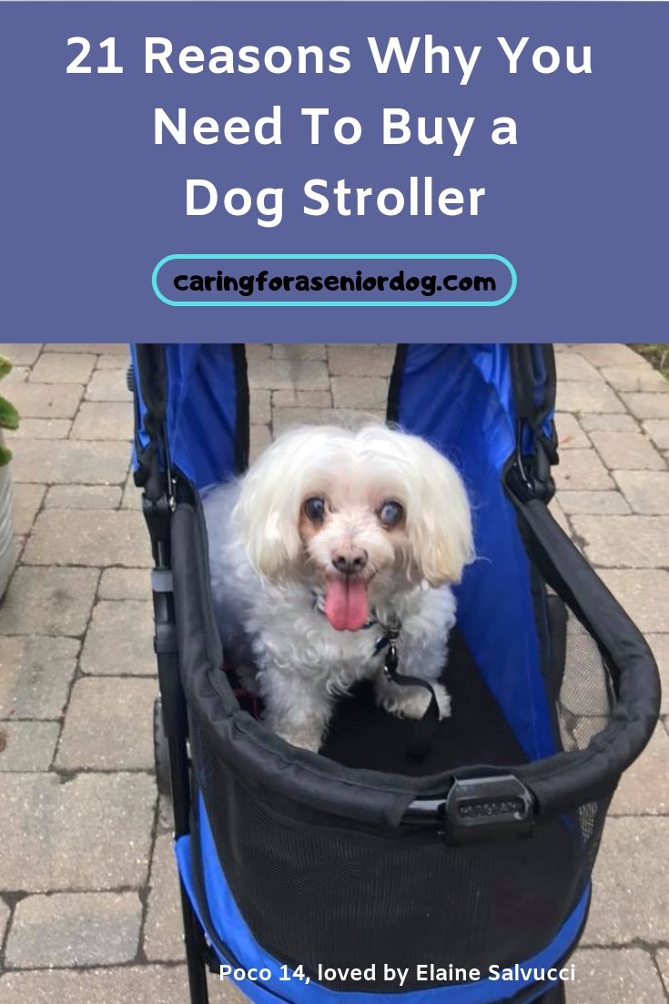 21 reasons why you need to buy a dog stroller