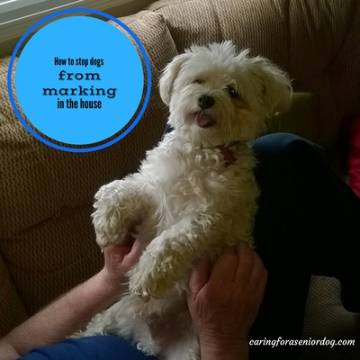 How to stop dogs from marking in the house