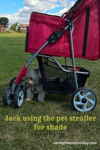 Jack using the pet stroller for shade