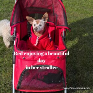 Red in her stroller