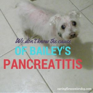 all about pancreatitis in dogs