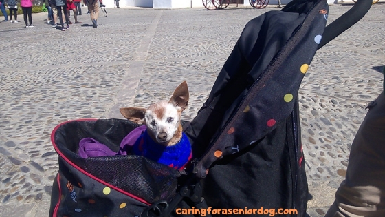 pet strollers for dogs are a marvelous invention