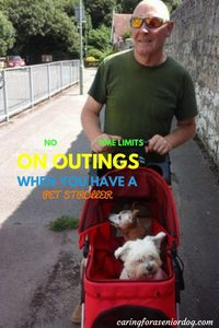 reasons why you need a pet stroller