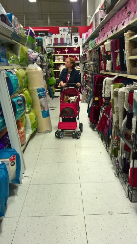 shopping with the dogs in their pet stroller
