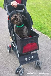 so many reasons why you need a pet stroller