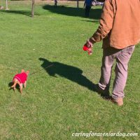 r-and-red-in-stanley-park-with-watermark