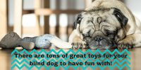 toys for blind dogs