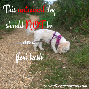 untrained dog on extendable leash