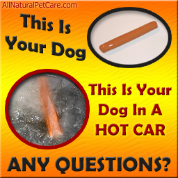 Dogs die in hot cars poster