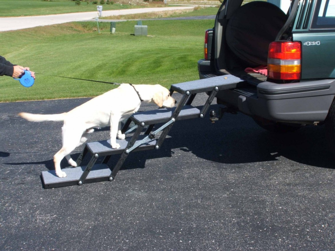 Dog Ramp For Car >> Caring For a Senior Dog