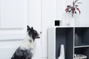 Petcube Interactive Wi Fi Pet Camera for the home