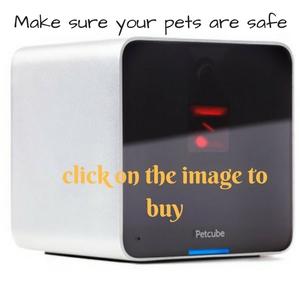buy Petcube interactive wi fi pet camera