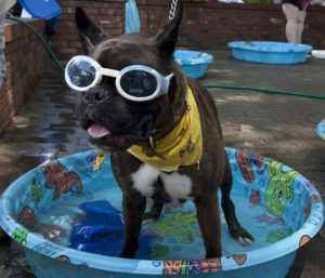 swimming is great exercise for dogs with hip dysplasia