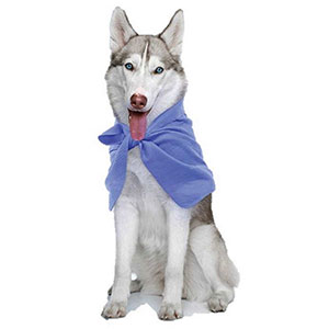 Chillz Wrapz dog cooling bandana