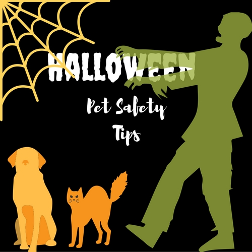 Halloween pet safety tips