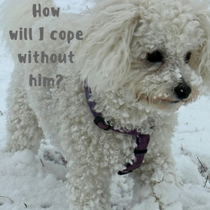 coping after the loss of a pet