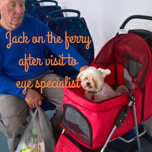 Jack on the ferry in a pet stroller