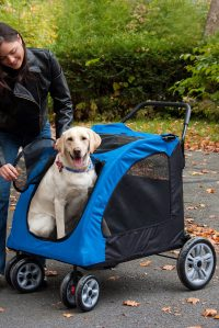 tips for buying the best pet stroller for a big dog