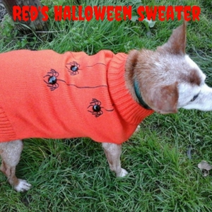 make your own dog Halloween costumes