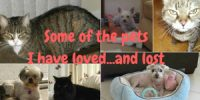 the loss of pets I have loved