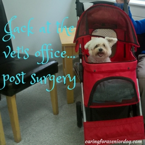 at the vets office in a pet stroller