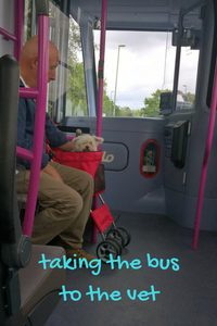 taking the pet stroller on the bus