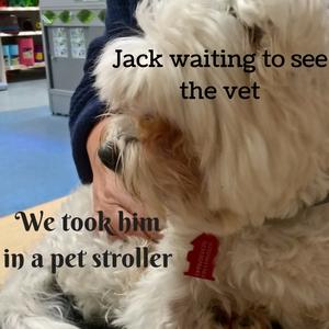 took Jack to see vet in pet stroller