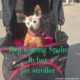 why you need a pet stroller