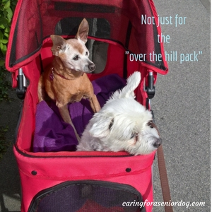pet strollers are not just for senior dogs