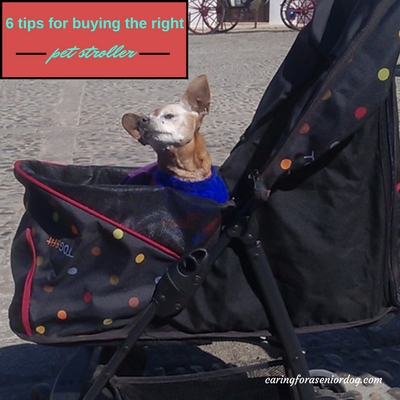 6 tips to help you choose the perfect pet stroller